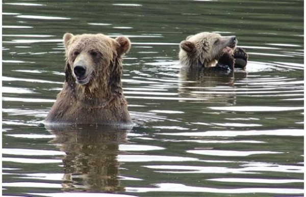 Grizzly bears are a popular tourist attraction at Knight Inlet on the B.C. coast, showing that the two species can safely coexist when humans act predictably. Experts warn that Interior grizzlies not accustomed to congregations of bears at coastal salmon streams require more personal space.