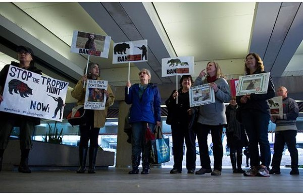 Protesters against illegal poaching and hunting gather outside B.C. Provincial Court before Anaheim Ducks defenceman Clayton Stoner was expected to enter a plea in Vancovuer Friday Nov. 13, 2015. Stoner is charged with five counts under the Wildlife Act after a grizzly bear was killed on the central coast in 2013. Photograph by: Darryl Dyck, CP