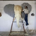 Mold of Elephant head