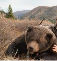 Possibly the 2nd Largest grizzly bear hunted in Northern B.C. in Oct'16- killed by a trophy hunter from the U.S. on a guided hunt